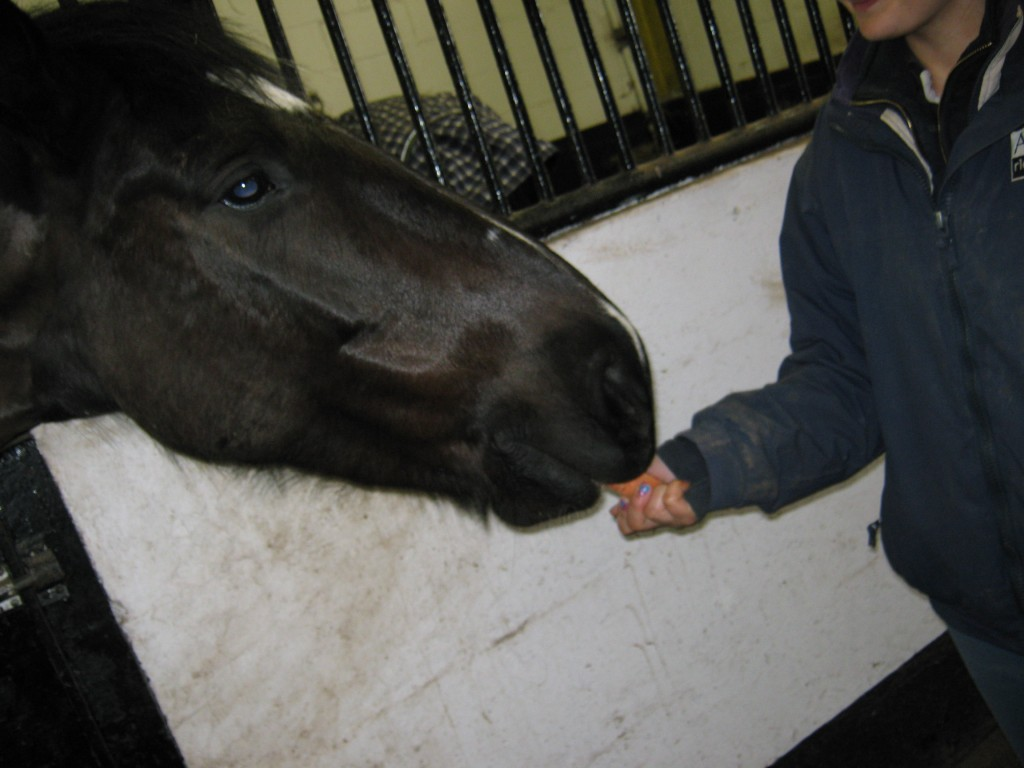 £10 could buy some carrots for our hard-working ponies and horses