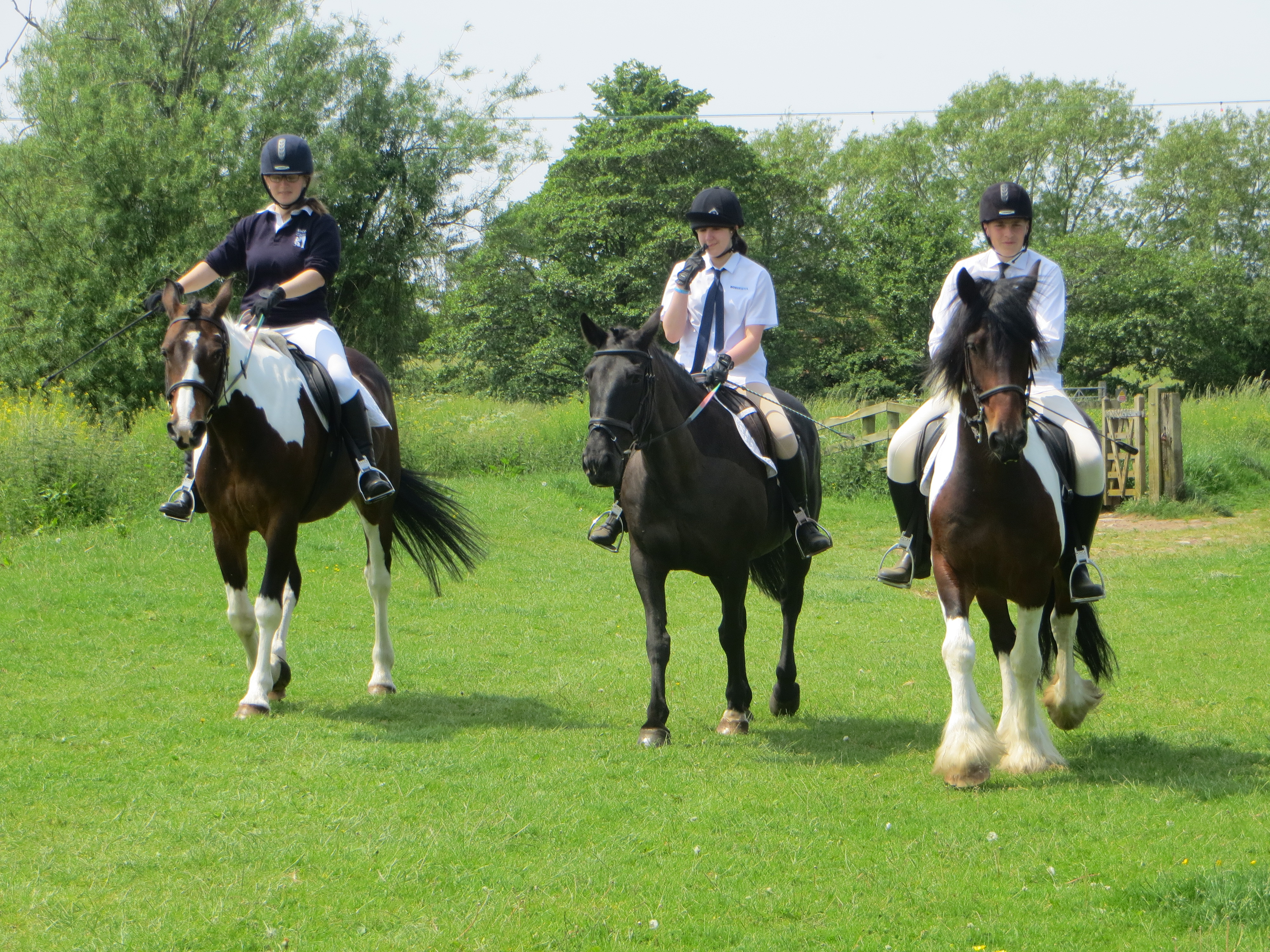 Our wonderful trio of riders and horses: Geroge on Robbie, Stella on Hope and Milie on Bella