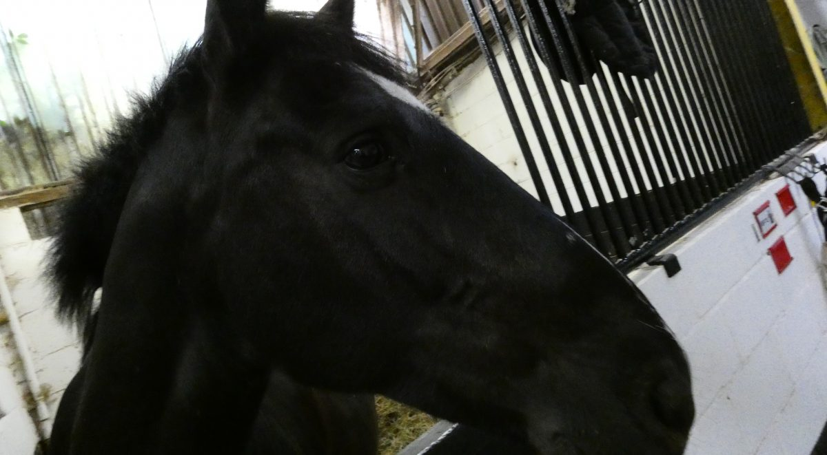 Horse Appeal